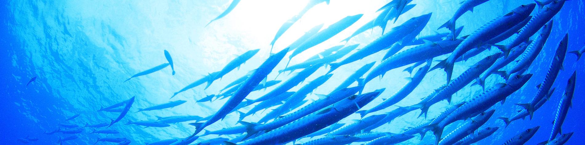 bandeau-poisson